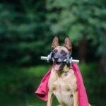 convulsioni - pronto soccorso veterinario