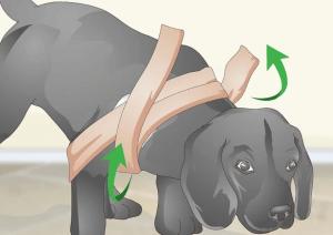 bendaggio spalla cane 4