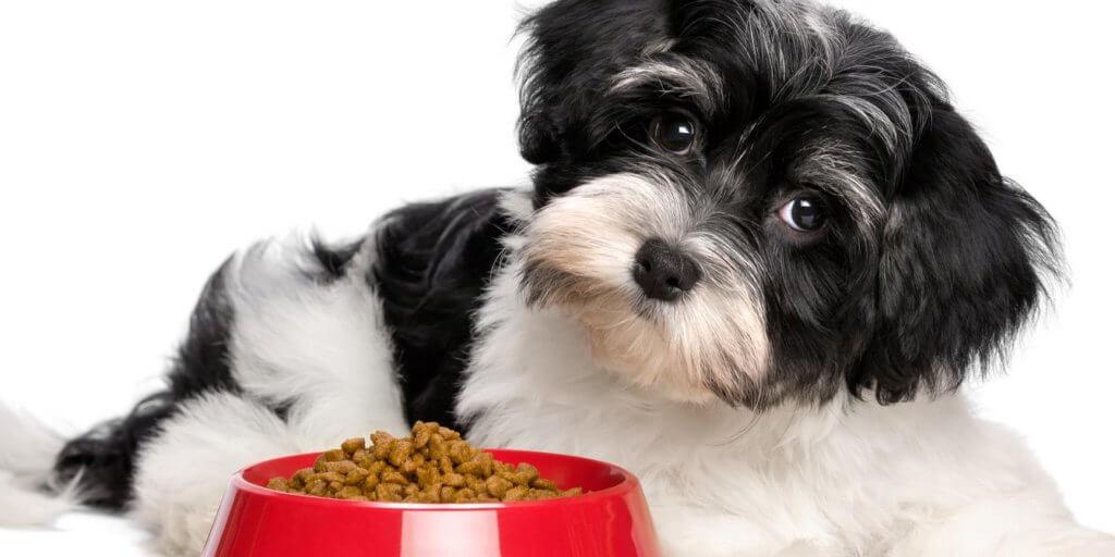 cane-gatto-sovrappeso corretta alimentazione