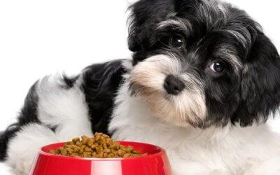 Animale domestico in sovrappeso
