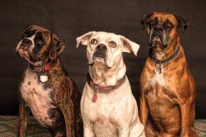 cani-preoccupati-per-la-propria-salute