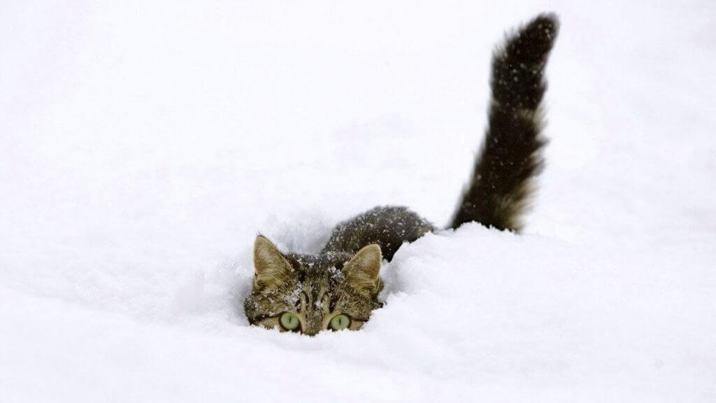 combattere e prevenire il congelamento