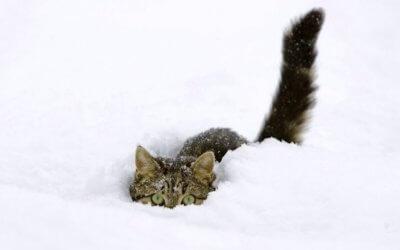 Come Prevenire e Combattere il Congelamento
