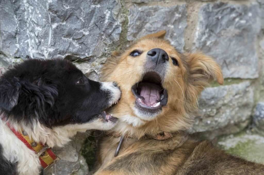 come curare un morso di un cane