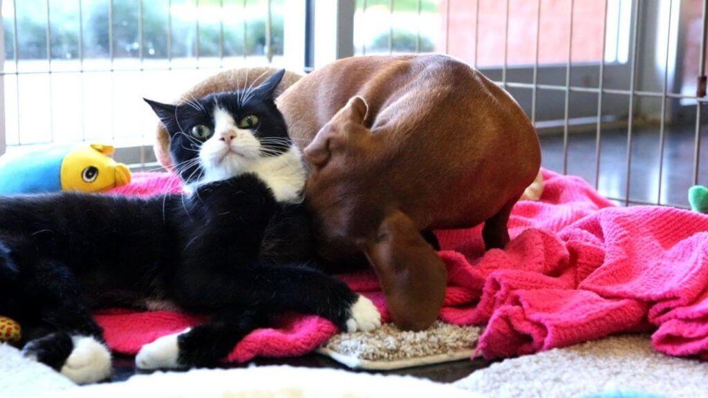 gatti e cani disabili - come aiutare