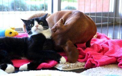 Trattamenti Specializzati per Cani e Gatti Disabili