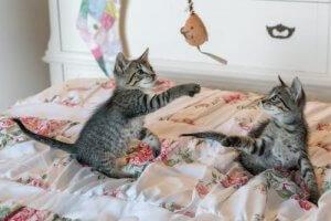 gatti-in-casa-prevenzione-della-fiv