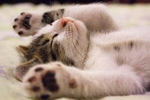 gatto-cucciolo-a-rischio-fiv