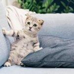 gatto-impaurito-esposizione-alla-fiv