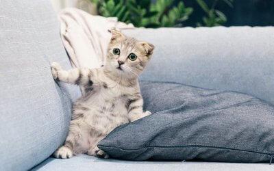Fiv: gatto infetto da AIDS felina
