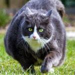 obesità e sovrappeso nei cane e nel gatto