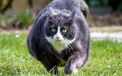 Sovrappeso nel cane e nel gatto