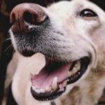 patologia cavità orale cane e gatto