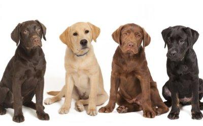 Problemi per diverse Razze di Cane – Gatto
