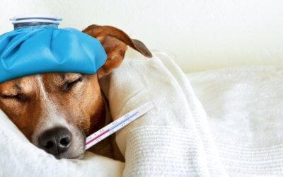 Sintomi della febbre nel cane, cura e prevenzione