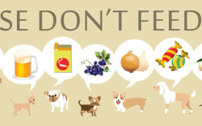 10 Cibi vietati per cani e gatti