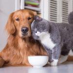 alimentazione-cane-gatto-adulto
