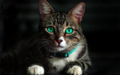 Pazzie e scorribande notturne dei gatti.
