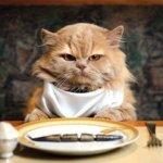 cambiare alimentazione gatto