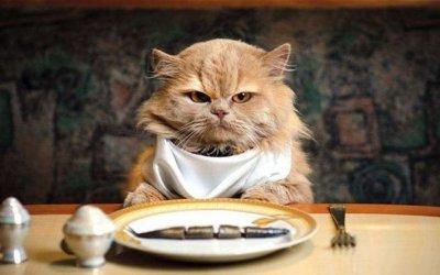 Come cambiare la dieta al gatto