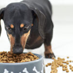 consigli alimentazione-cane-gatto