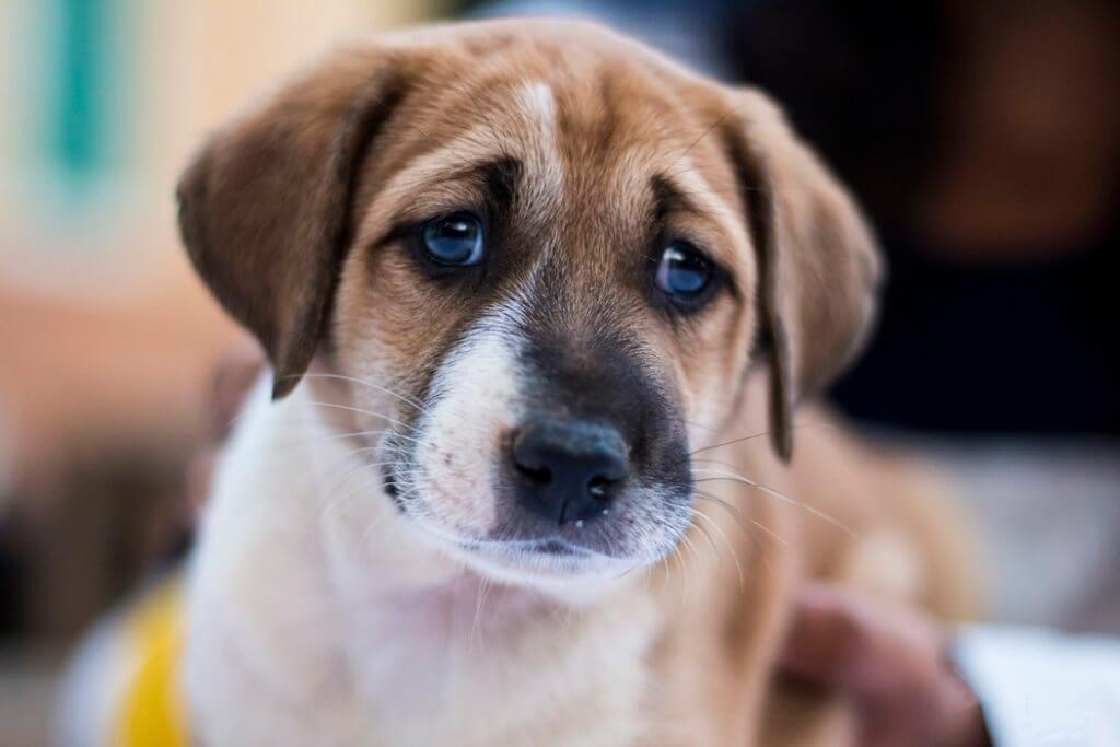 dolore cane e gatto sintomi e manifestazioni