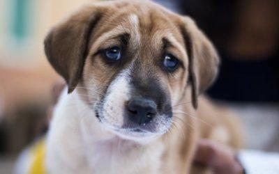 Come capire i segnali di dolore nel cane e nel gatto