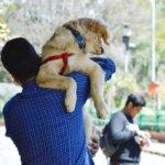 drvet -proteggi il tuo cane