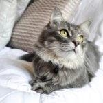 problemi tiroide cane gatto alimentazione