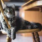 trasloco gatto