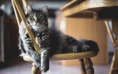 Come trasferirsi in una nuova casa con un gatto