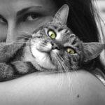 problemi comportamentali gatto