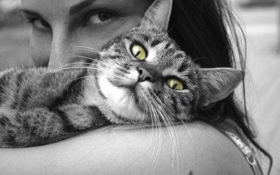 10 Problemi comportamentali nei gatti