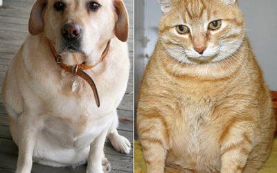 Prevenzione al sovrappeso e obesità – Cani e Gatti