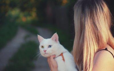 Che cos'è la Felv – Leucemia Felina