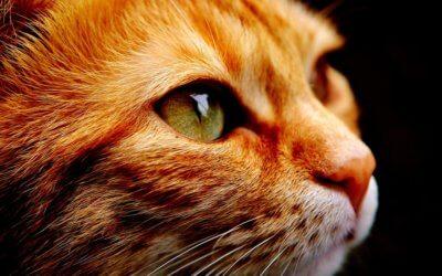 Come addestrare un gatto, consigli e trucchi