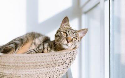 6 problemi di salute nei gatti più comuni