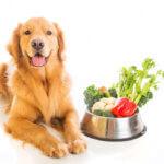 verdure alimentazione cane gatto