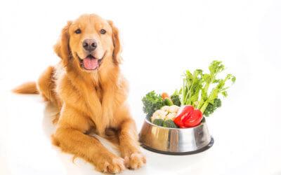 7 verdure consigliate per i cani