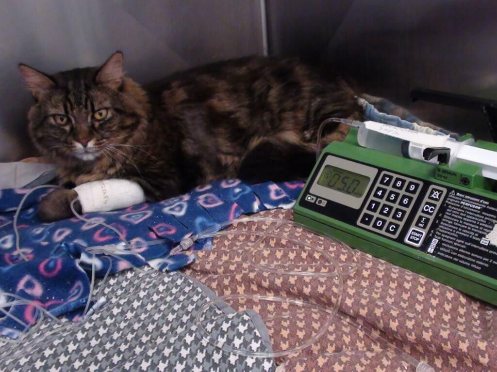 alimentazione paziente cane gatto ospedalizzato