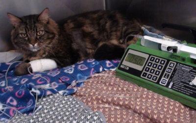 Nutrizione nel Gatto e nel Cane Ospedalizzato