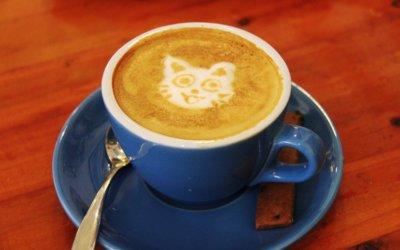 Effetti della Caffeina sugli animali – Cura e Prevenzione