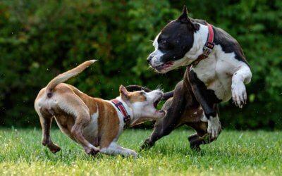 Cosa fare se il tuo cane viene morso da un altro cane