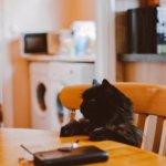 nutrizione malattie cardiovascolari del gatto