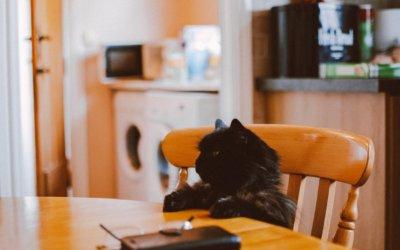 Nutrizione nelle malattie cardiovascolari del gatto