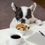 problemi al fegato cane e gatto