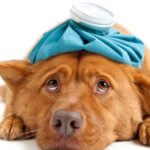 pronto-soccorso-veterinario-doctorvet