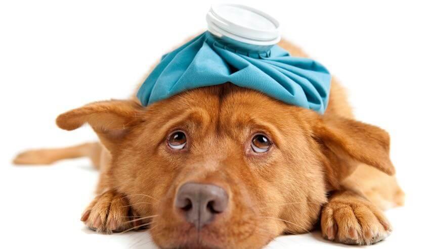 pronto-soccorso-veterinario-doctorvet
