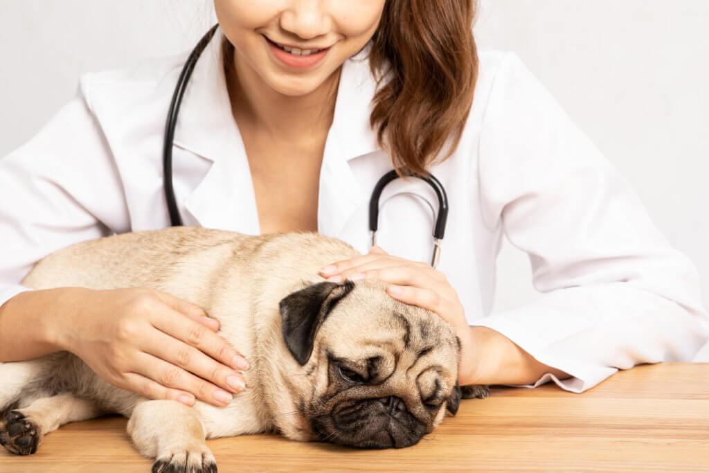 stress: come prevenirlo - cani e gatti