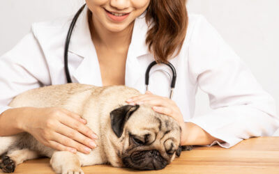 Lo Stress nei Cani – Prevenzione, Cause, Sintomi e Cura